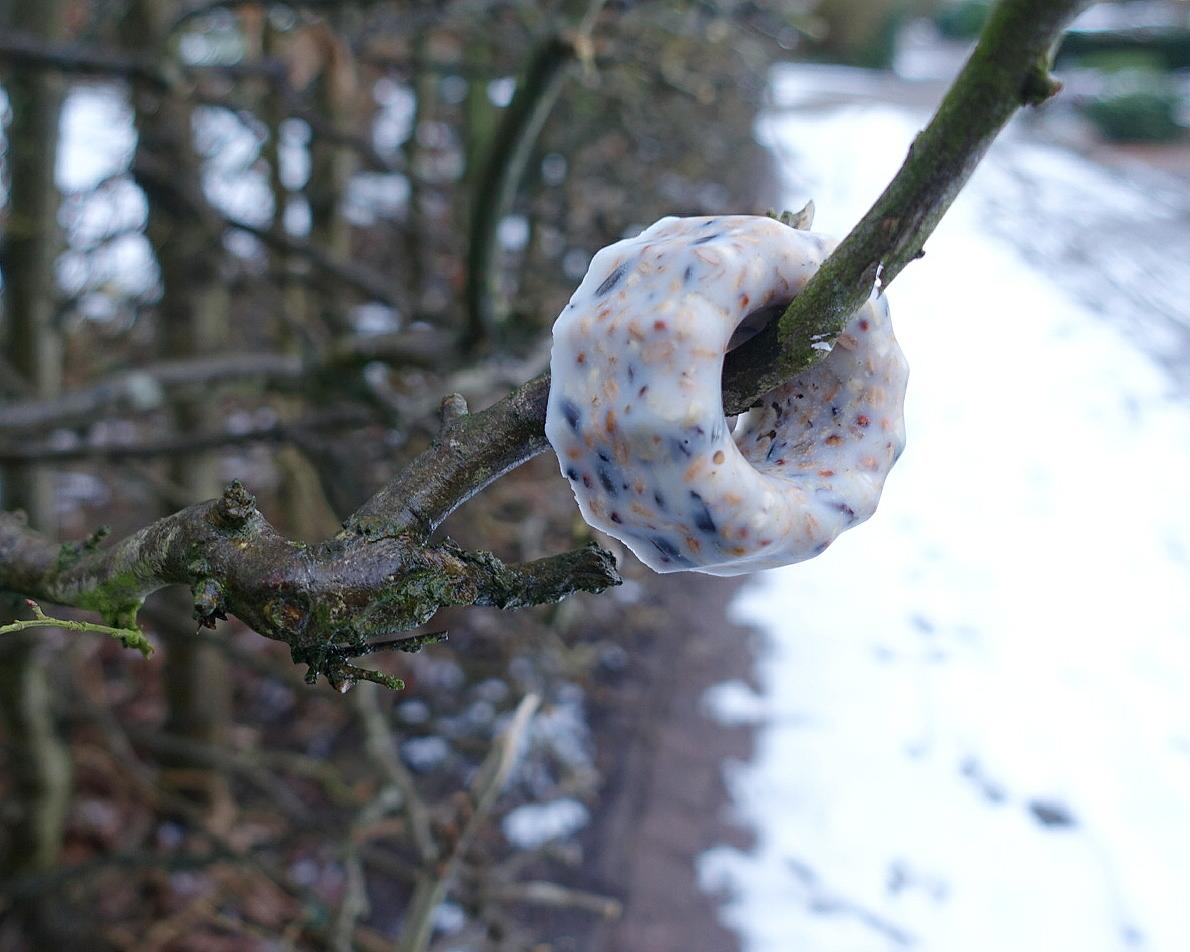 DIY Winterfutter für Vögel