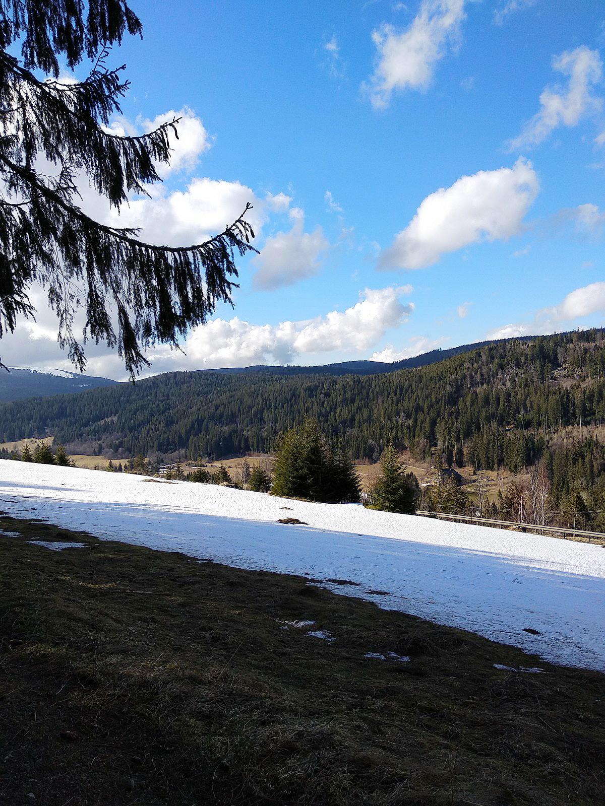 (Doch) Nix für Langweiler: Nordic Walking im Schwarzwald